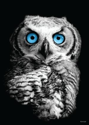 Plakat ugle sorthvid blå øjne