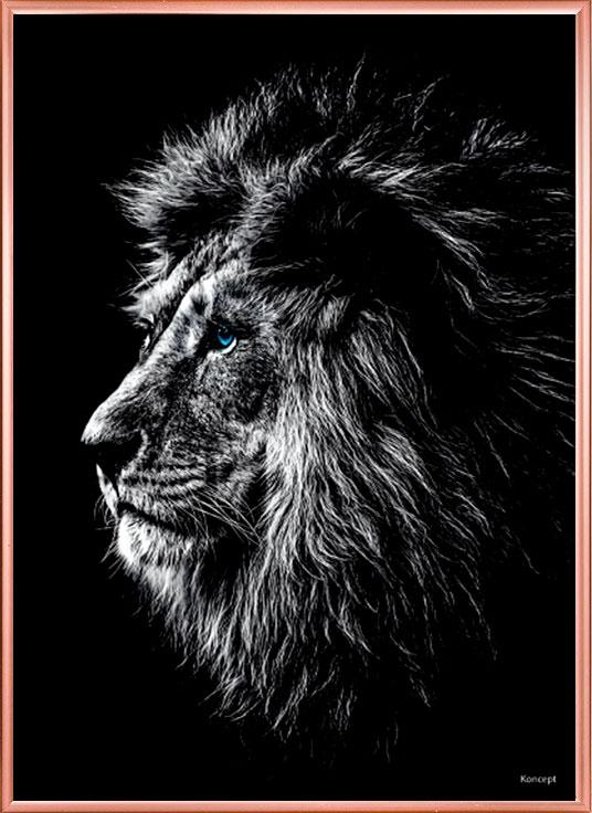 billeder plakater til væggen løve
