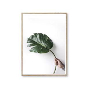 Billeder til væggen plant