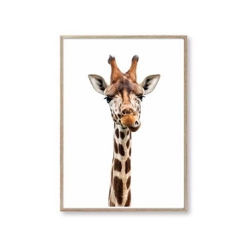 dyreplakater giraf