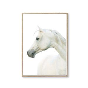 Plakater til hjemmet plakat hest