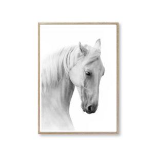 plakater heste hvid bolig