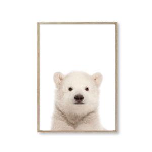 Plakater til hjemmet stuen isbjørn