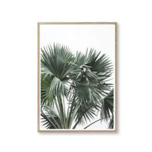Plakater planter billeder til væggen