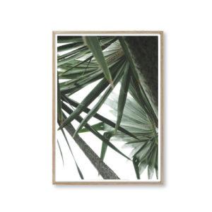 Plakater plante billeder til væggen