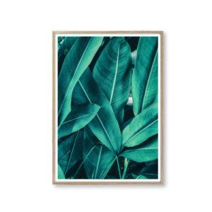 Plakater leaf billeder til væggen