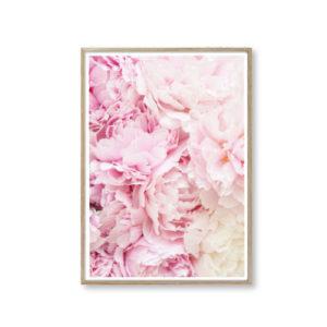 design plakater til stuen lyserød blomst