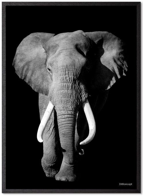 Elefant-Plakat Med Blå Øjne