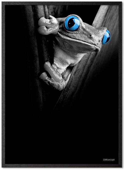 Frø-Plakat Med Blå Øjne