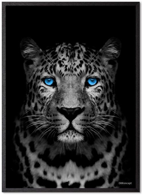 Gepard Plakat Med Blå Øjne