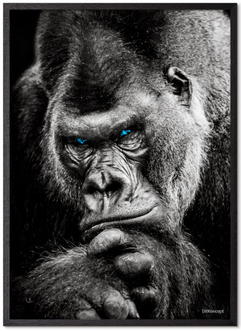Gorilla Plakat Med Blå Øjne