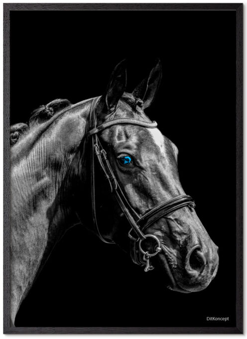 Hest Plakat Med Blå Øjne