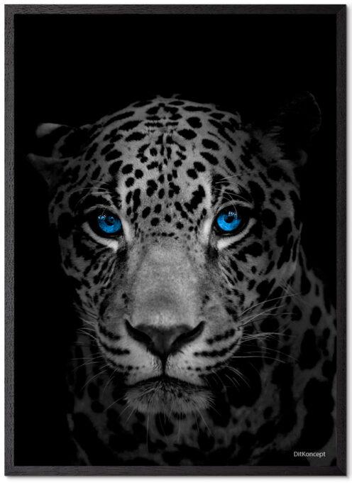 Jaguar Plakat Med Blå Øjne