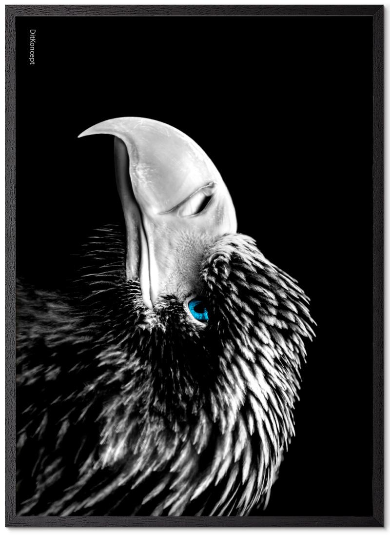 Ørne Plakat Med Blå Øjne