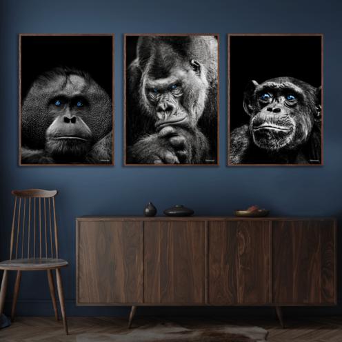 Orangotang-Gorilla-Chimpanse-Mørkebrun-Plakatrammer-Eg