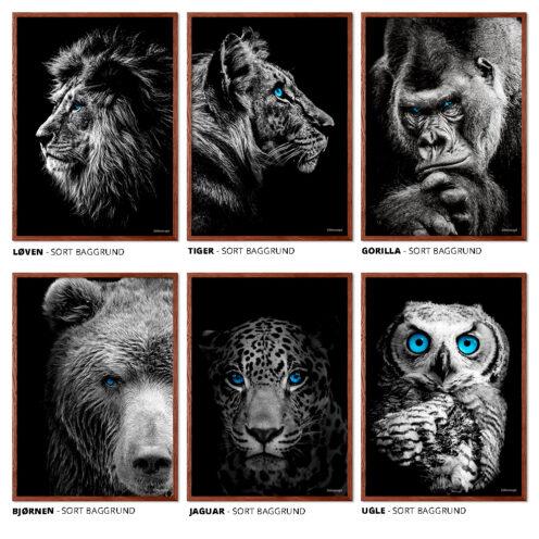 Løven Tigeren Gorilla Bjørnen Jaguaren Uglen