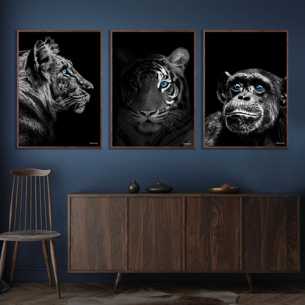 Tiger-Close-Up-Tiger-Chimpanse-Plakat-Mørkebrune-Plakatrammer-Eg