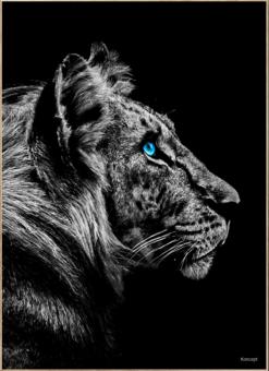 Tiger Plakat Bolig Hjemmet