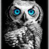 Ugle Plakat Med Blå Øjne