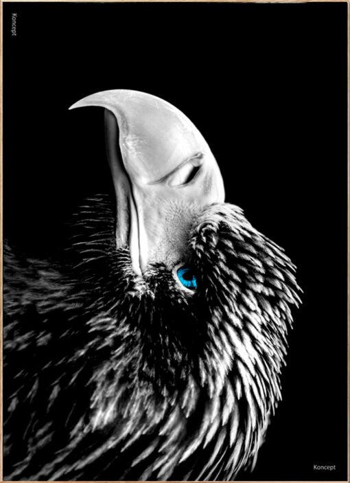 Ørn-Plakat-The-Eagle