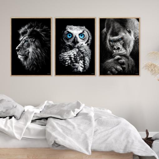 Gorilla-Løve-Ugle-Plakater
