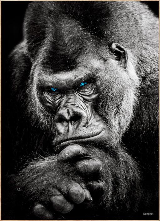 Gorilla Bolig Plakat