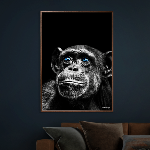Chimpanse-Plakat-50x70