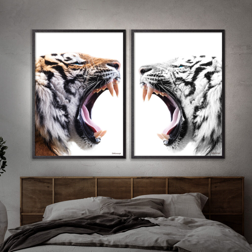 Color-Tiger-White-Tiger-2