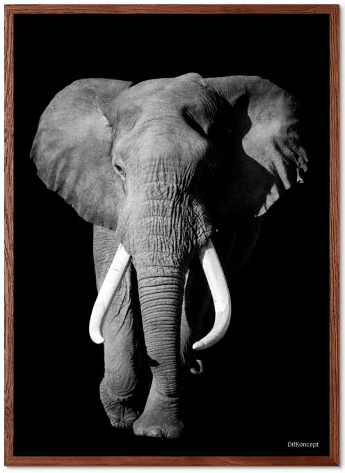 Elefant-Plakat-brun-Eg-Plakatramme