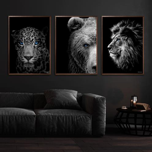Jaguar-Bjørn-Løve