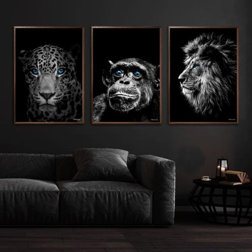 Jaguar-Chimpanse-Løve-Plakat