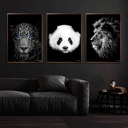 Jaguar-Panda-Løve