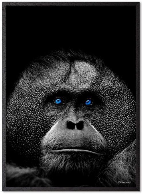 Orangotang-Plakat