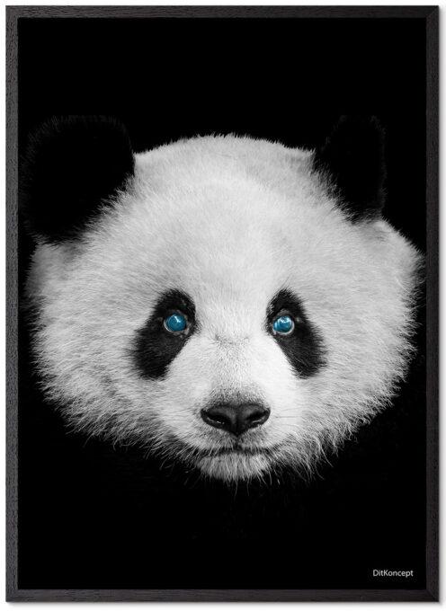 Panda-Plakat-Sort-Eg-Plakatramme