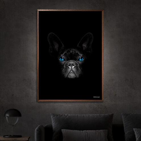 Fransk-Bulldog-miljø