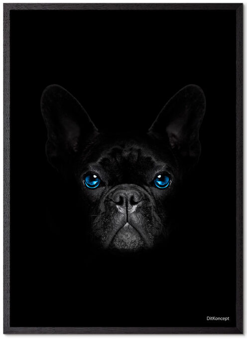 French-bulldog-sort-Plakatramme