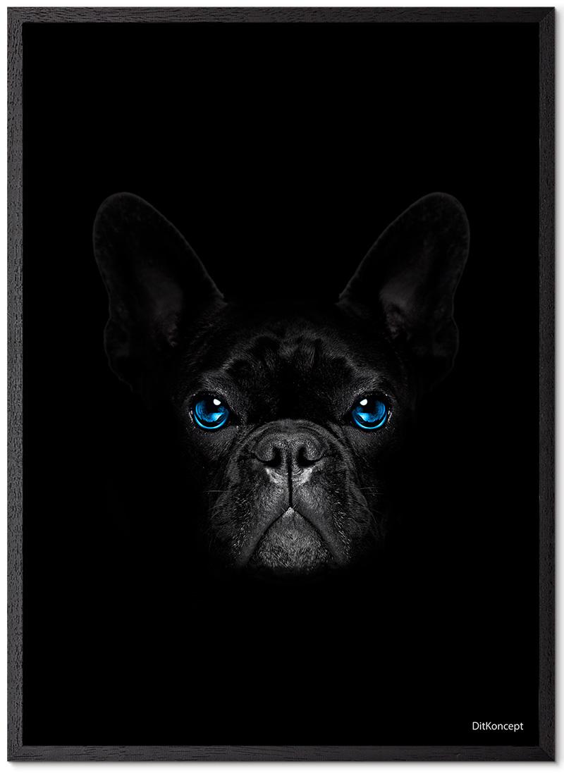 French-bulldog-sort-Plakatramme