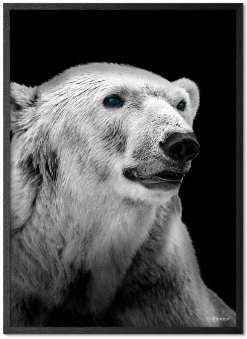Isbjørn-Plakat-Sort-plakatramme