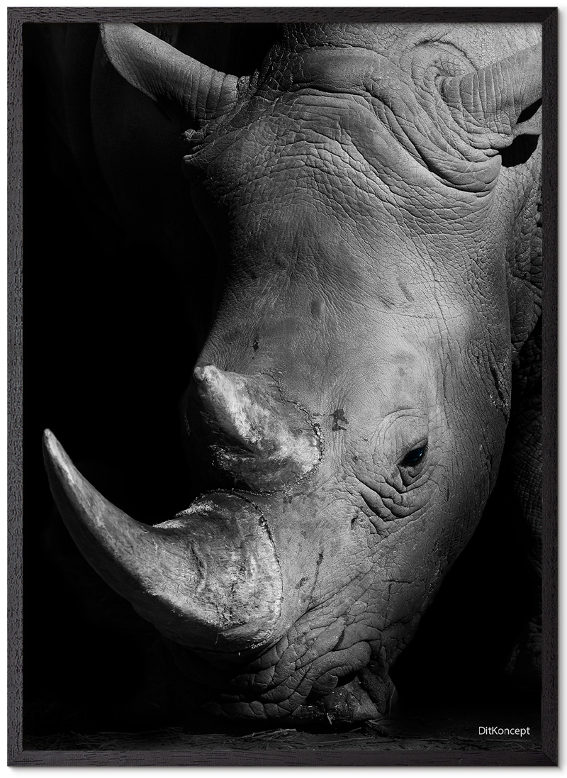 Næsehorn-Plakat-Sort-Eg-plakatramme