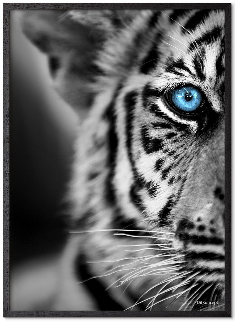 TigerBarn-Plakat-Sort-Plakatramme
