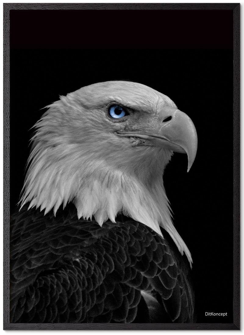 American-Eagle-Plakatramme-Sort-Eg
