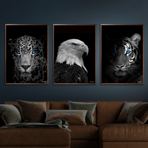 Jaguar-American-Eagle-Close-Up-Tiger