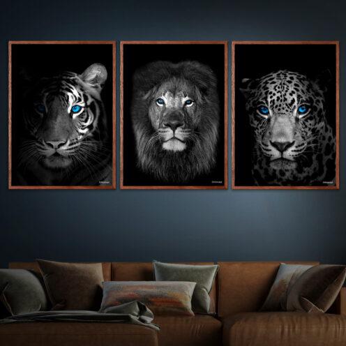 Close-Up-Tiger-Løven-Up-Front-Jaguar
