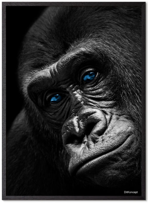 Gorilla-Close-Up-Plakatramme-Sort-Eg