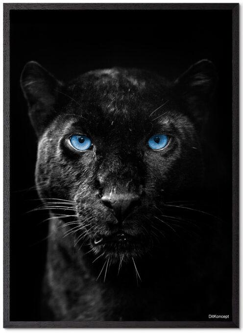 Sort-Leopard-Plakatramme-Sort