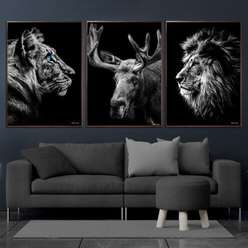 Tiger-Elg-Løve